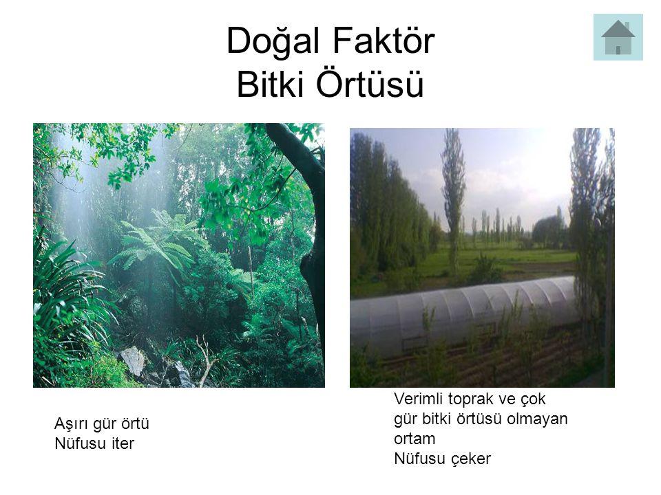 Doğal Faktör Bitki Örtüsü
