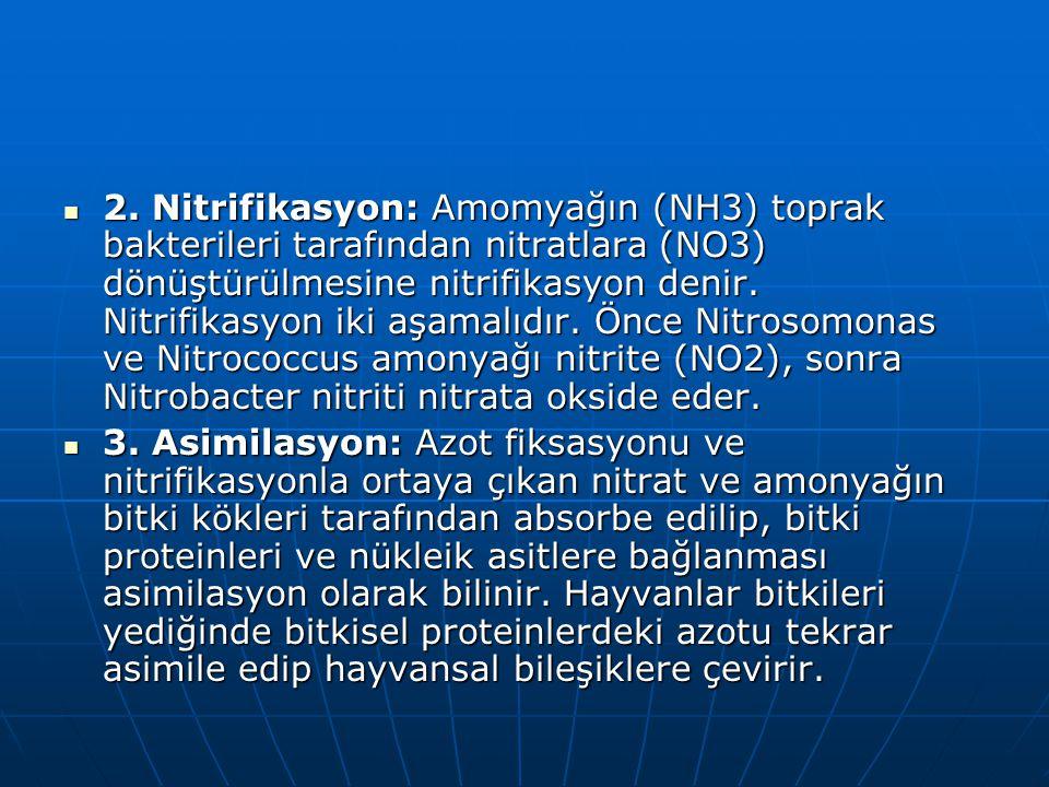 2. Nitrifikasyon: Amomyağın (NH3) toprak bakterileri tarafından nitratlara (NO3) dönüştürülmesine nitrifikasyon denir. Nitrifikasyon iki aşamalıdır. Önce Nitrosomonas ve Nitrococcus amonyağı nitrite (NO2), sonra Nitrobacter nitriti nitrata okside eder.