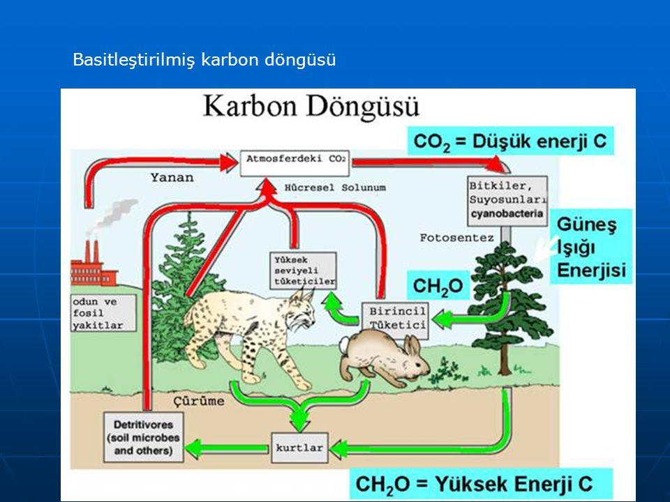 Basitleştirilmiş karbon döngüsü