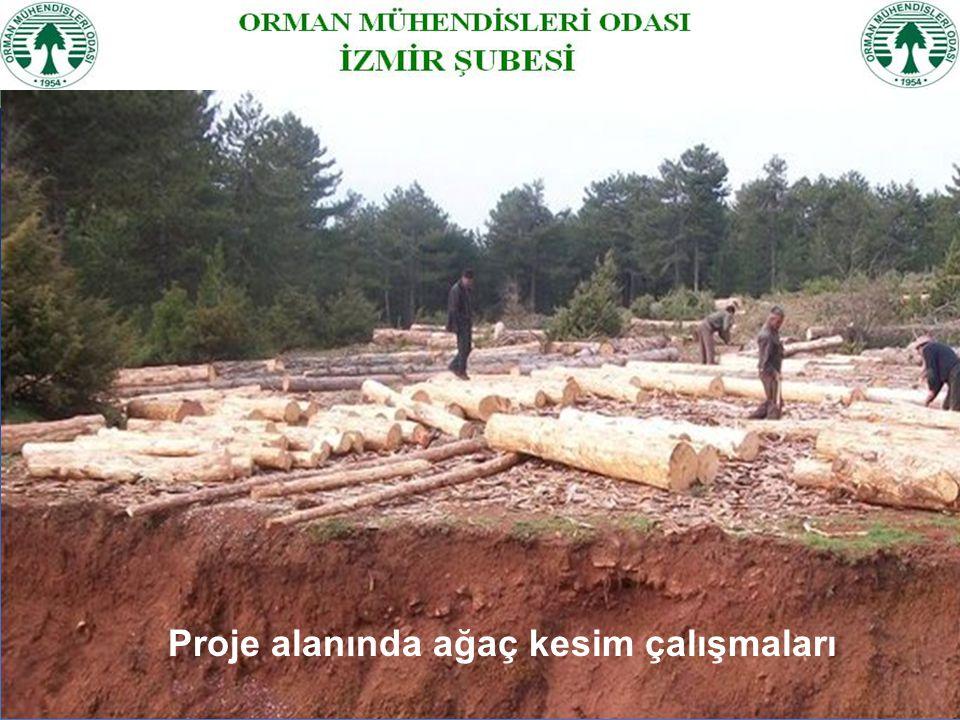 Proje alanında ağaç kesim çalışmaları