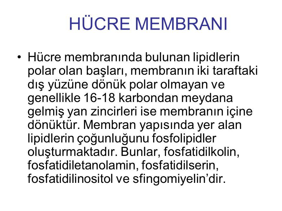 HÜCRE MEMBRANI