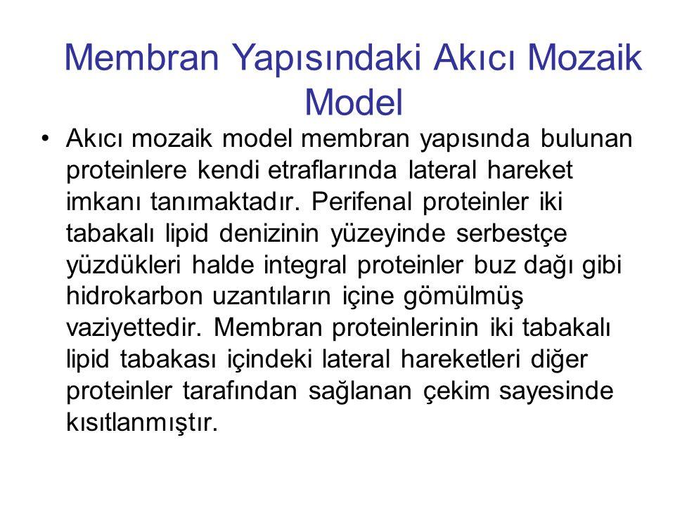 Membran Yapısındaki Akıcı Mozaik Model