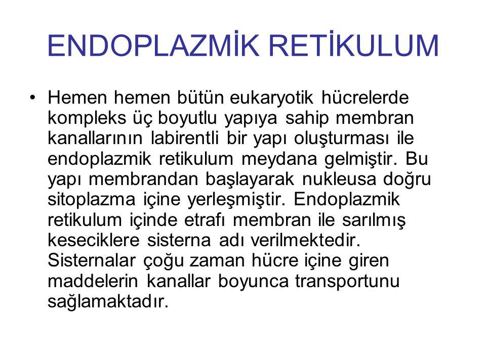 ENDOPLAZMİK RETİKULUM