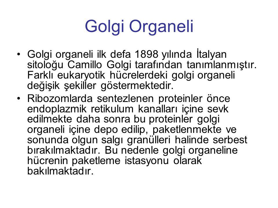 Golgi Organeli