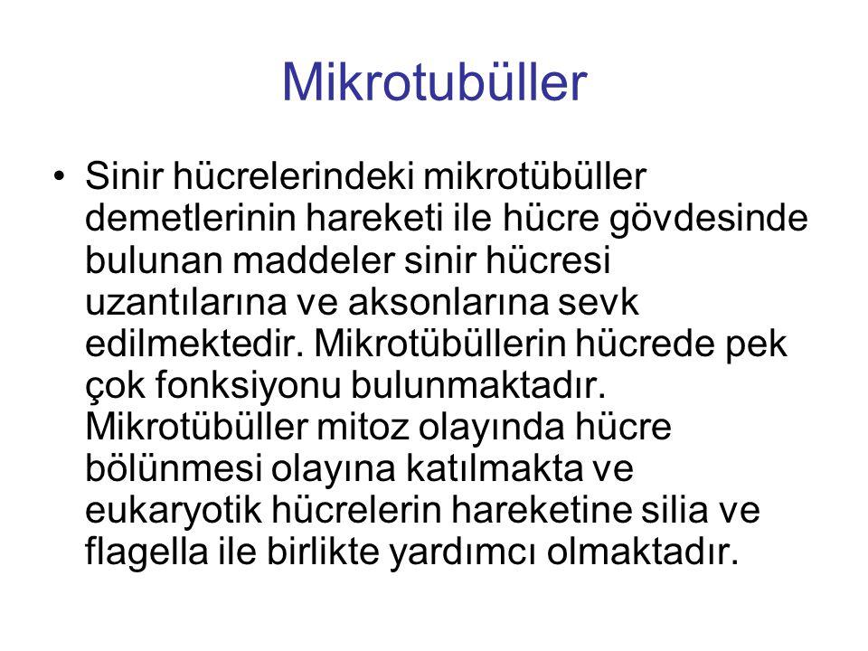Mikrotubüller