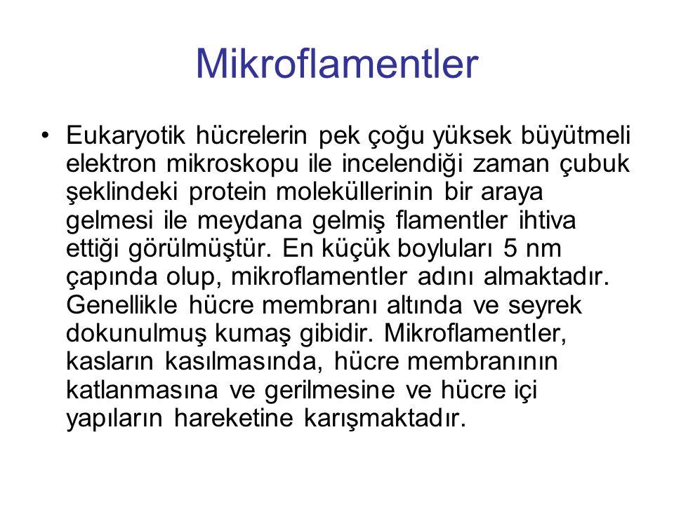 Mikroflamentler