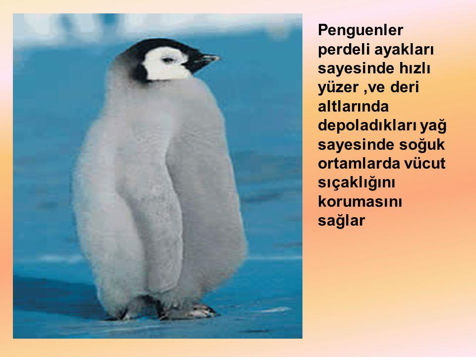 Penguenler perdeli ayakları sayesinde hızlı yüzer ,ve deri altlarında depoladıkları yağ sayesinde soğuk ortamlarda vücut sıçaklığını korumasını sağlar