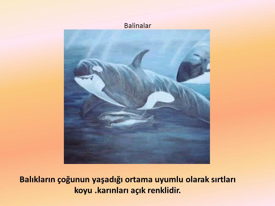 Balinalar Balıkların çoğunun yaşadığı ortama uyumlu olarak sırtları koyu .karınları açık renklidir.