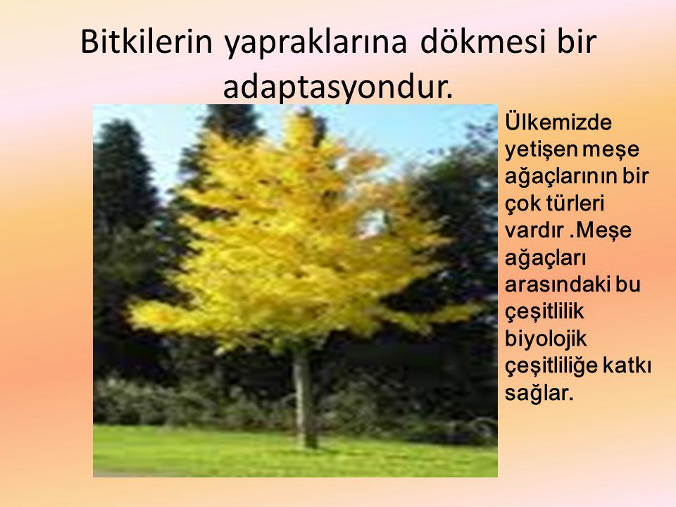Bitkilerin yapraklarına dökmesi bir adaptasyondur.