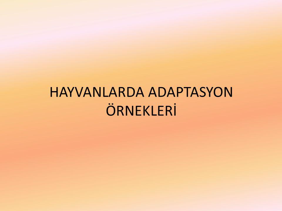 HAYVANLARDA ADAPTASYON ÖRNEKLERİ