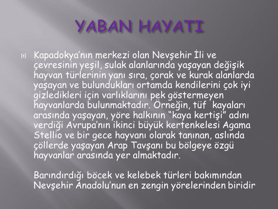 YABAN HAYATI