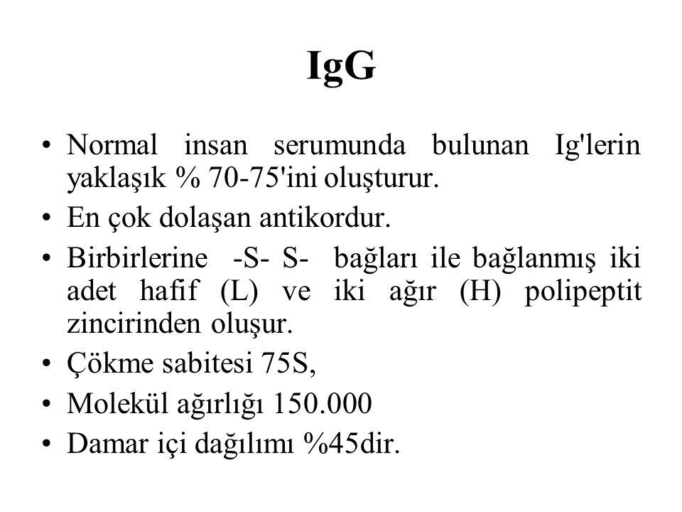 IgG Normal insan serumunda bulunan Ig lerin yaklaşık % 70-75 ini oluşturur. En çok dolaşan antikordur.