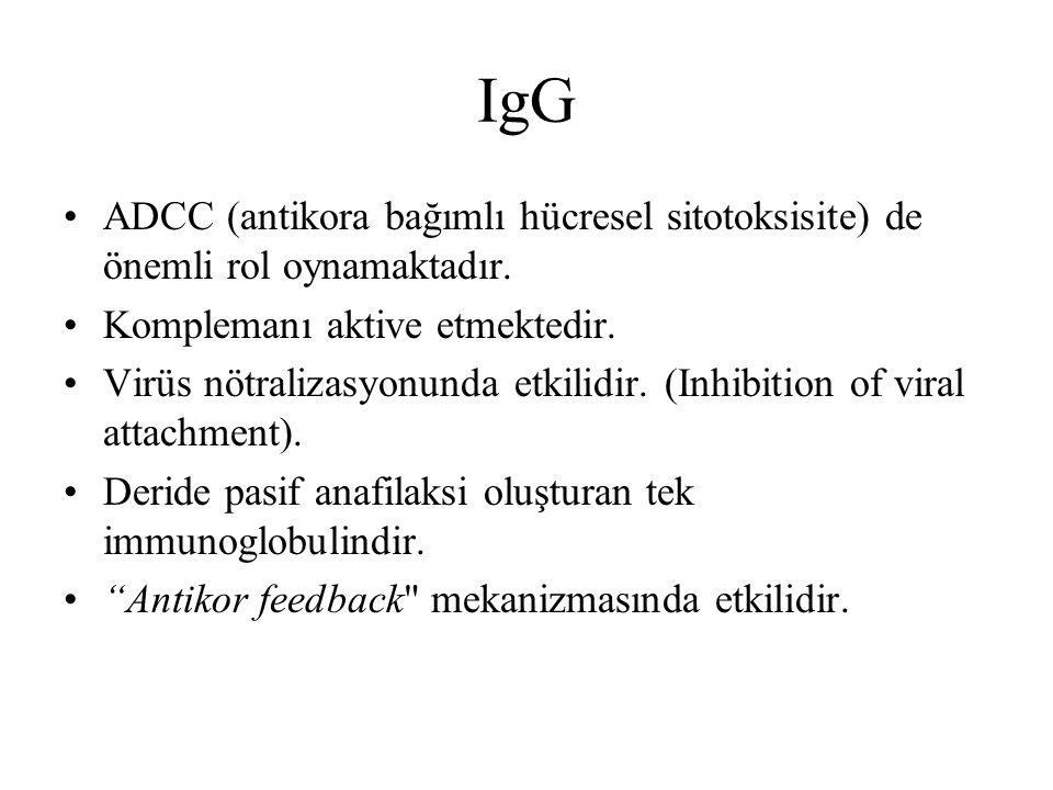 IgG ADCC (antikora bağımlı hücresel sitotoksisite) de önemli rol oynamaktadır. Komplemanı aktive etmektedir.