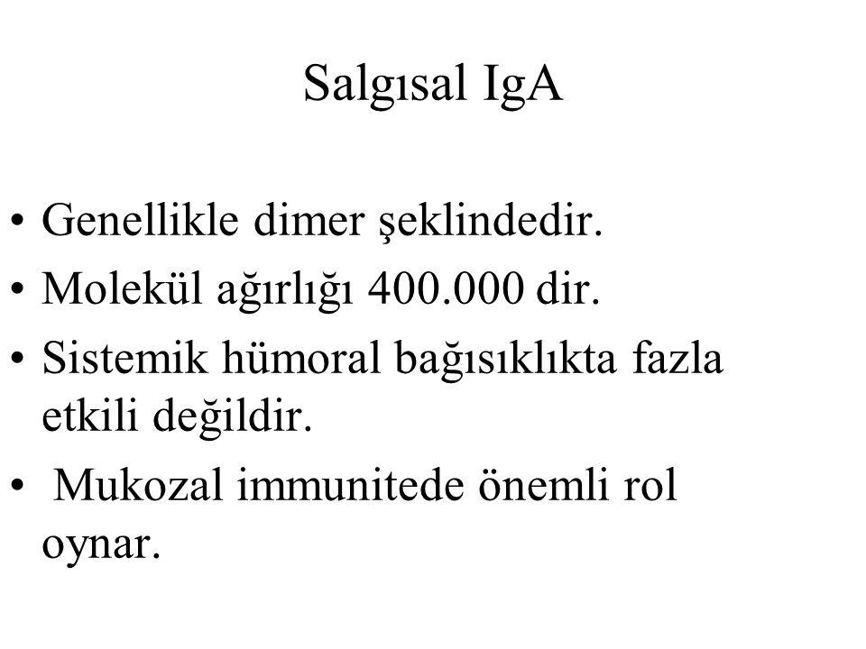 Salgısal IgA Genellikle dimer şeklindedir.