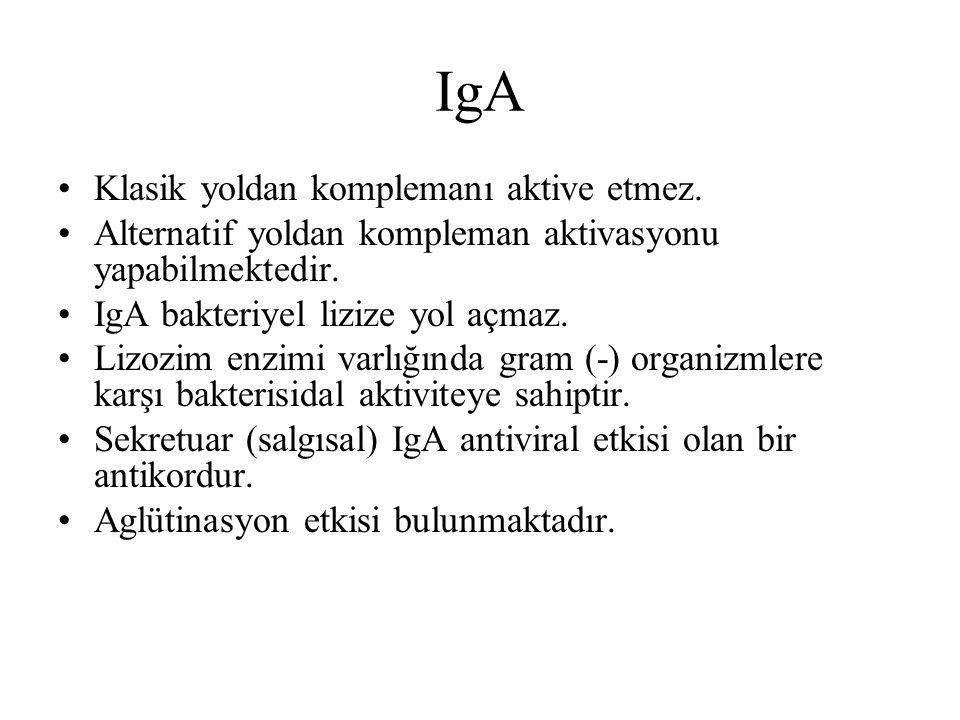 IgA Klasik yoldan komplemanı aktive etmez.