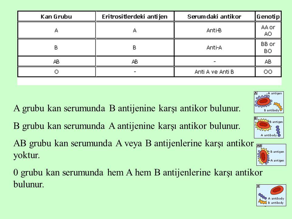 A grubu kan serumunda B antijenine karşı antikor bulunur.