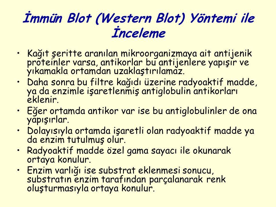 İmmün Blot (Western Blot) Yöntemi ile İnceleme