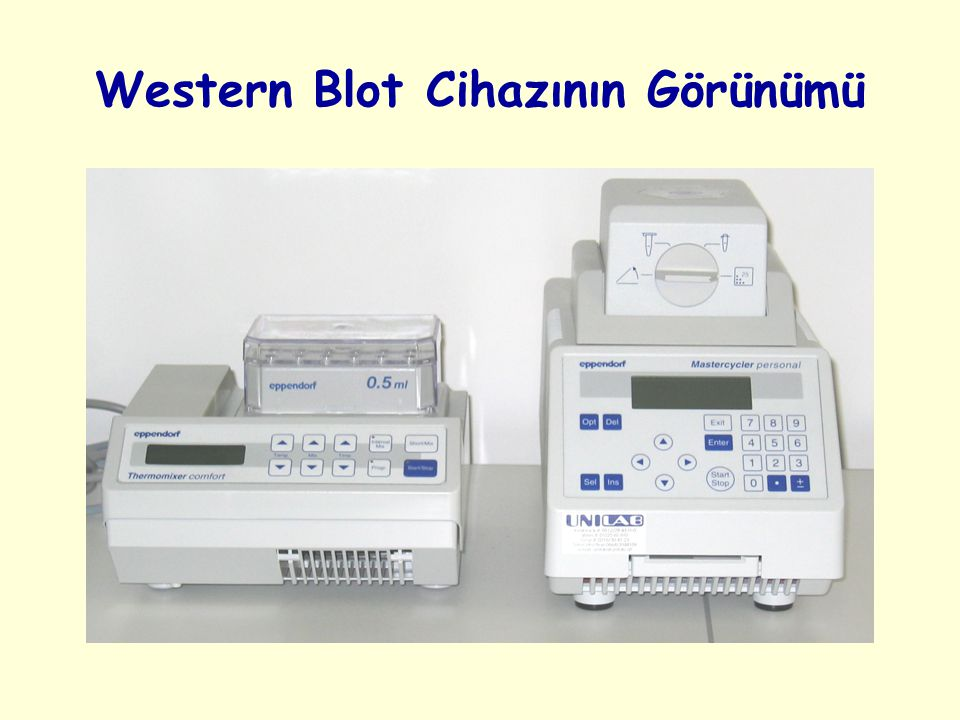 Western Blot Cihazının Görünümü