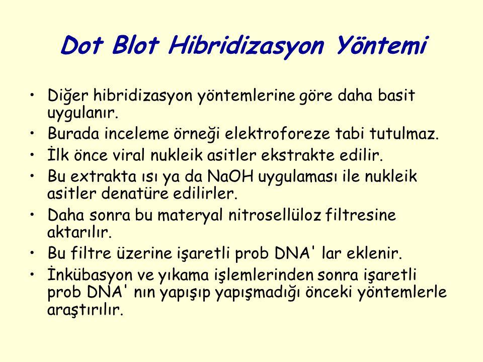 Dot Blot Hibridizasyon Yöntemi