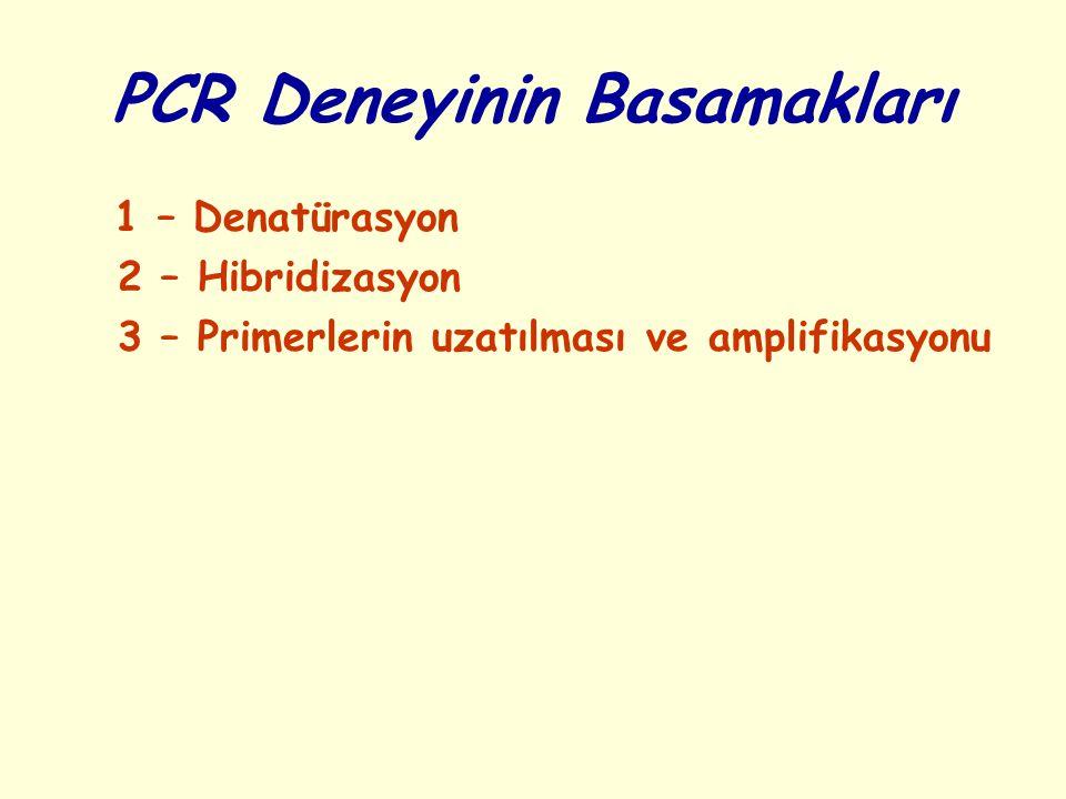 PCR Deneyinin Basamakları