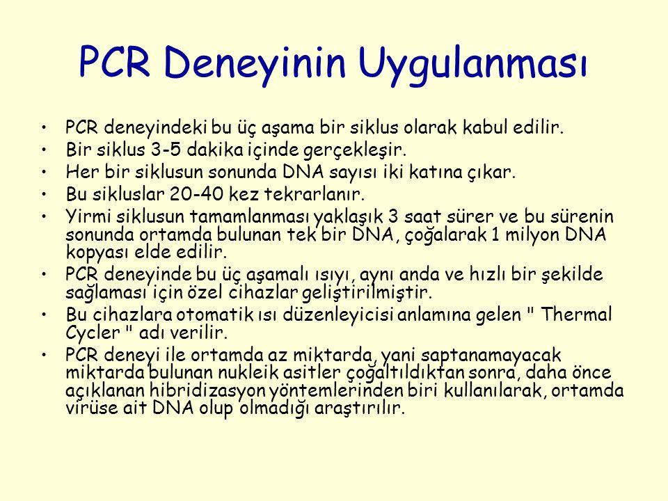 PCR Deneyinin Uygulanması