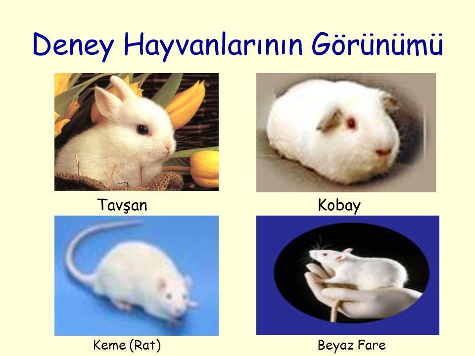Deney Hayvanlarının Görünümü