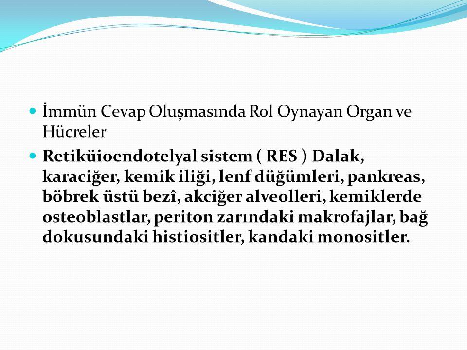 İmmün Cevap Oluşmasında Rol Oynayan Organ ve Hücreler