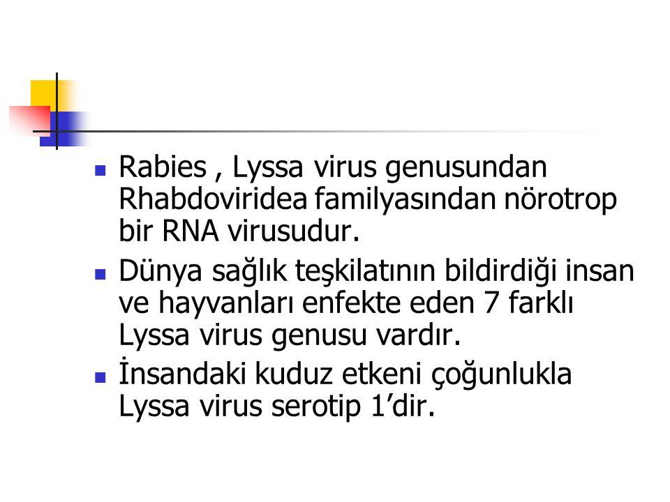 Rabies , Lyssa virus genusundan Rhabdoviridea familyasından nörotrop bir RNA virusudur.