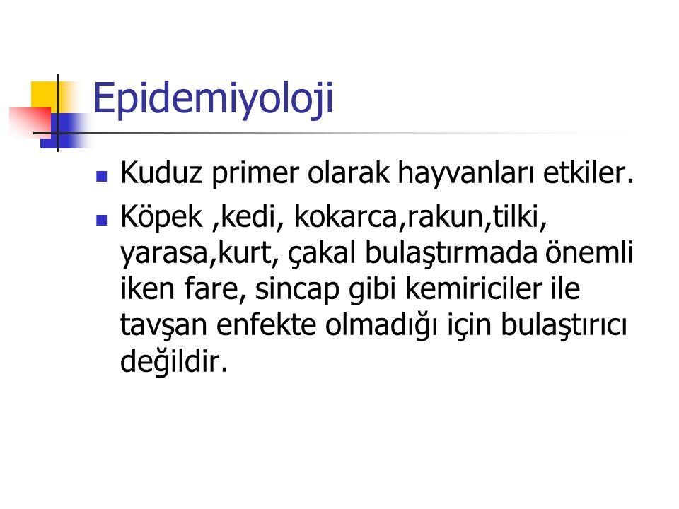 Epidemiyoloji Kuduz primer olarak hayvanları etkiler.