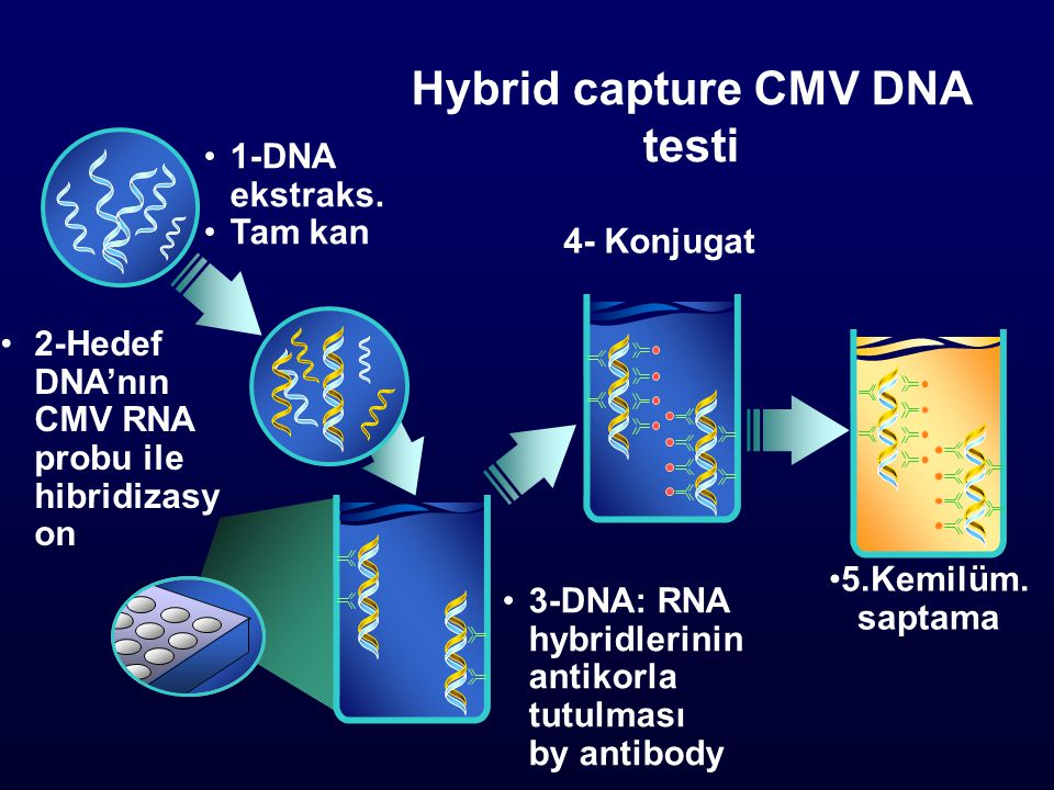 Hybrid capture CMV DNA testi