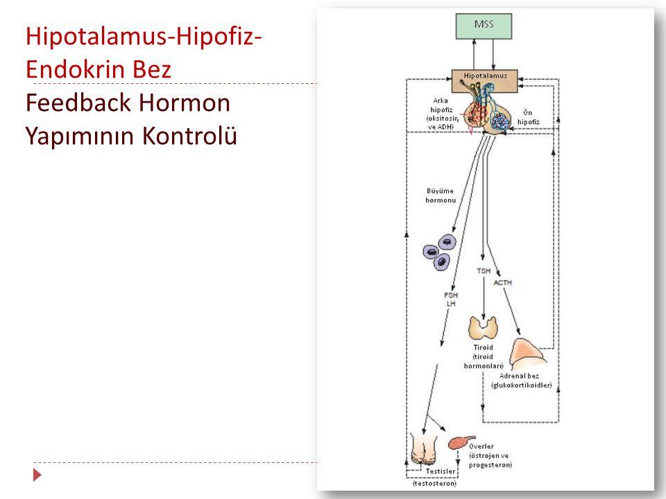 Hipotalamus-Hipofiz-Endokrin Bez Feedback Hormon Yapımının Kontrolü