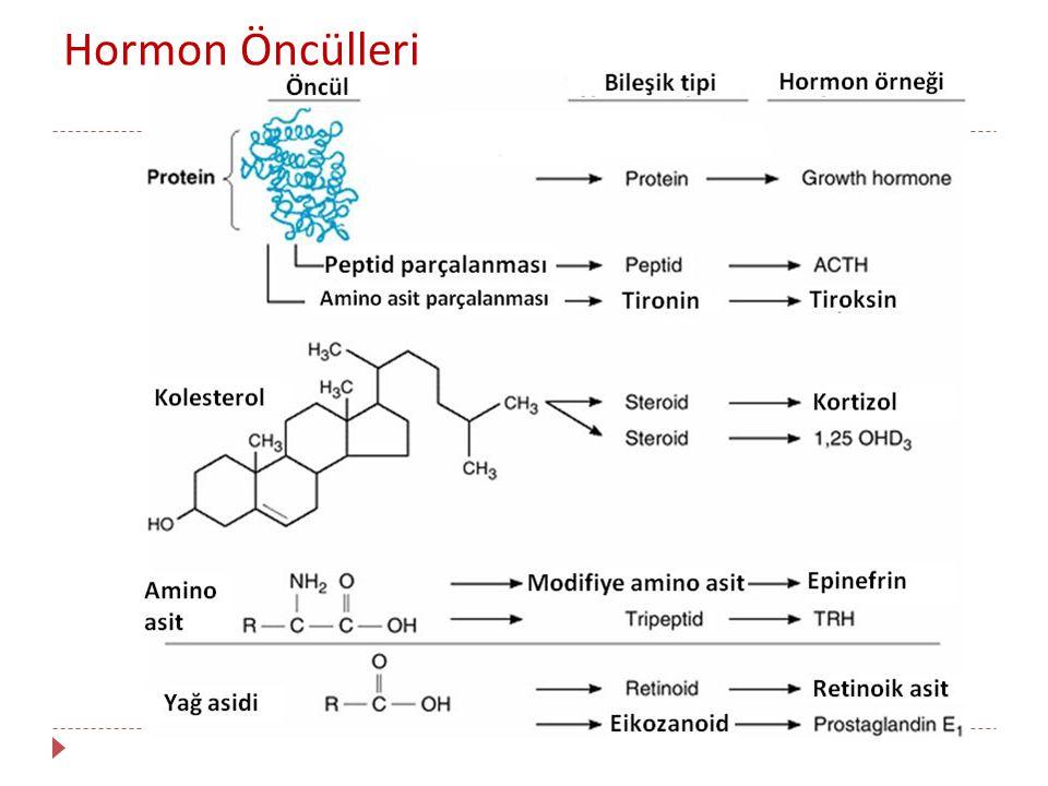 Hormon Öncülleri