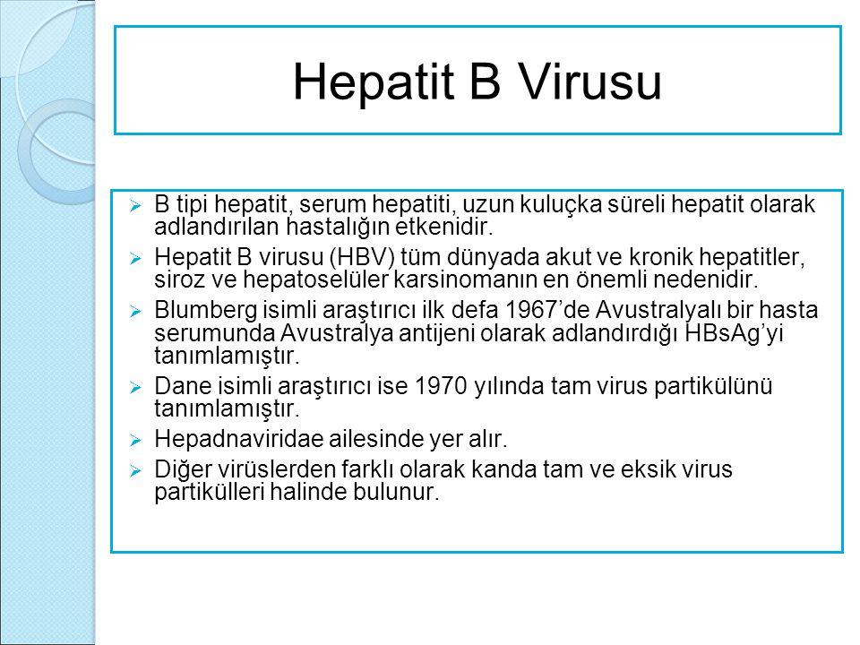 Hepatit B Virusu B tipi hepatit, serum hepatiti, uzun kuluçka süreli hepatit olarak adlandırılan hastalığın etkenidir.