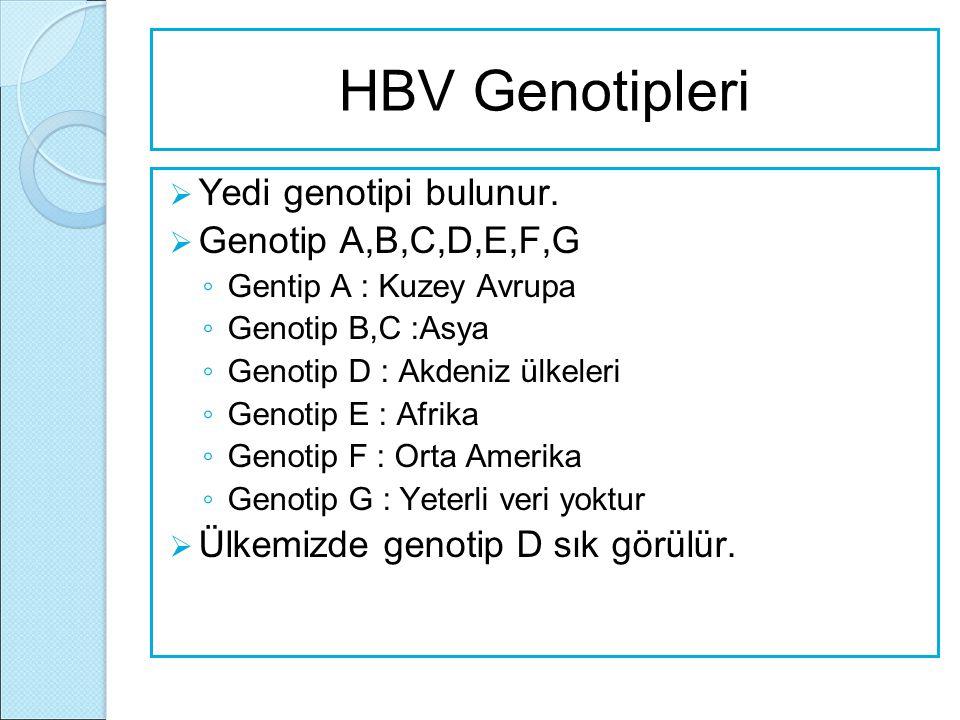 HBV Genotipleri Yedi genotipi bulunur. Genotip A,B,C,D,E,F,G