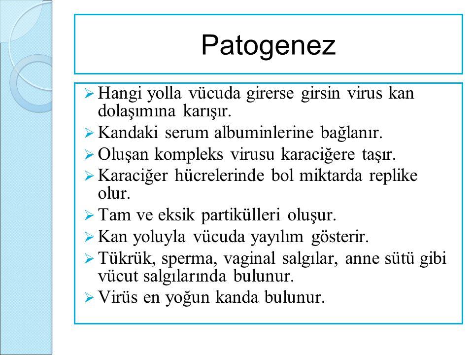 Patogenez Hangi yolla vücuda girerse girsin virus kan dolaşımına karışır. Kandaki serum albuminlerine bağlanır.