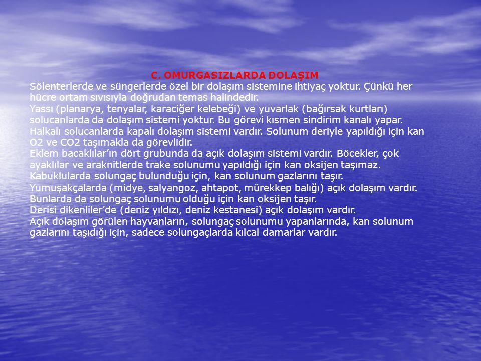 C. OMURGASIZLARDA DOLAŞIM