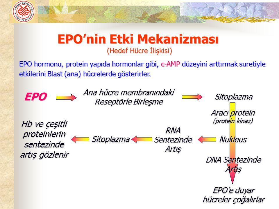 EPO'nin Etki Mekanizması