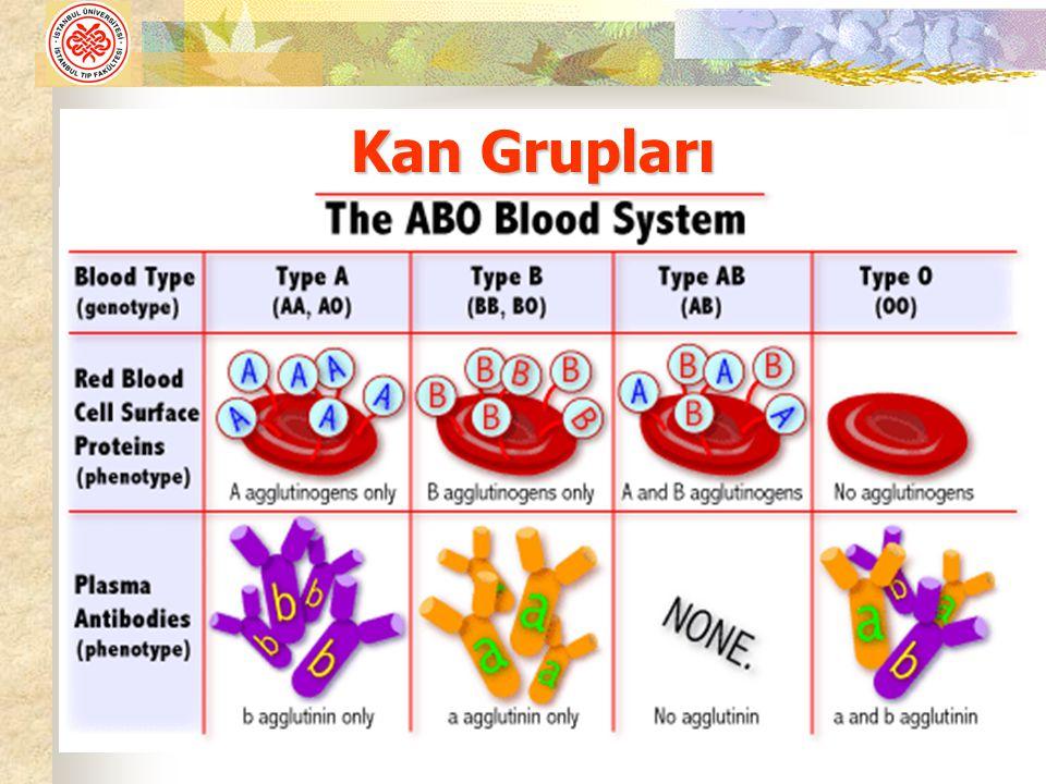 Kan Grupları