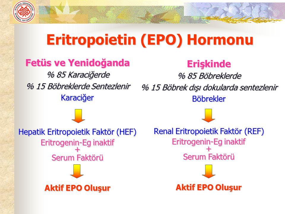 Eritropoietin (EPO) Hormonu