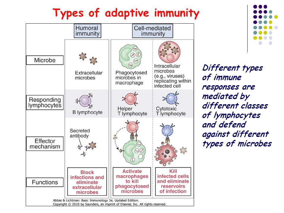 Types of adaptive immunity