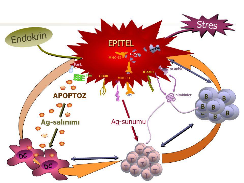 Stres Endokrin EPiTEL EPİTEL Virus Genetik yapılanma EPITEL APOPTOZ