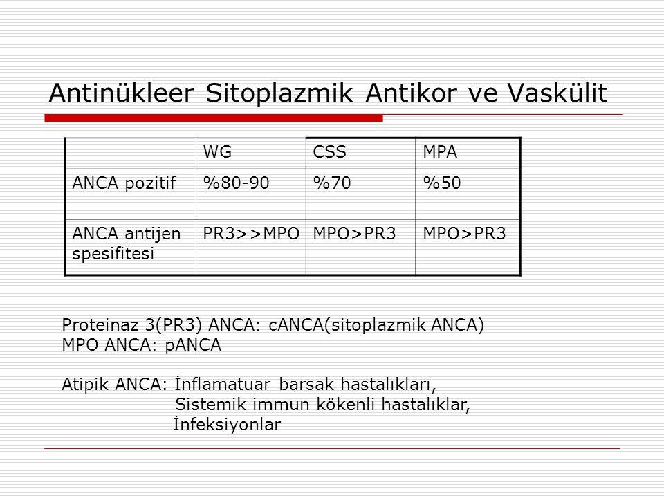 Antinükleer Sitoplazmik Antikor ve Vaskülit