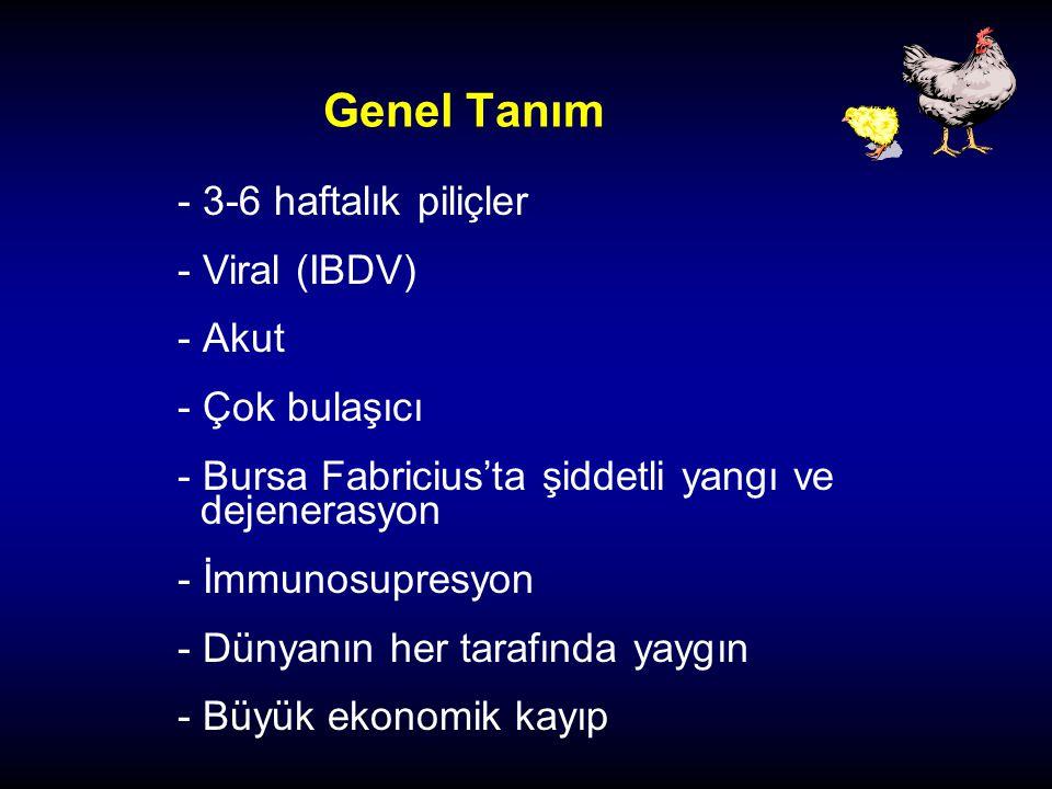 Genel Tanım 3-6 haftalık piliçler Viral (IBDV) Akut Çok bulaşıcı