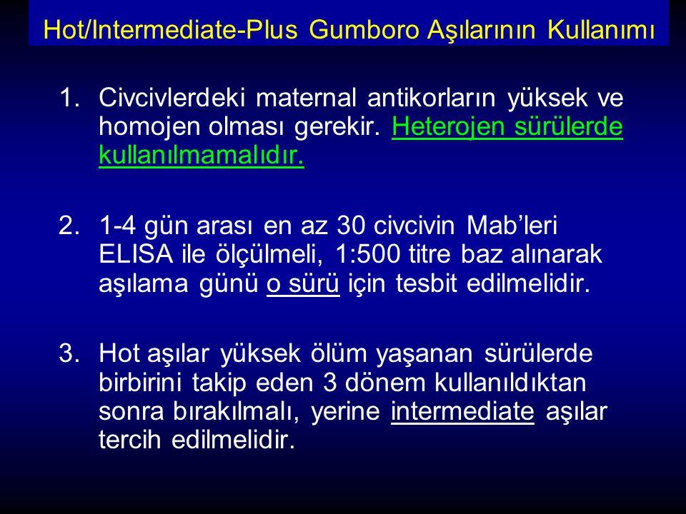 Hot/Intermediate-Plus Gumboro Aşılarının Kullanımı