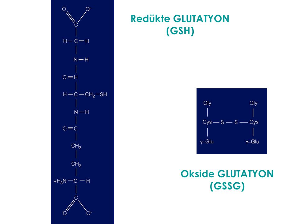 Redükte GLUTATYON (GSH) Okside GLUTATYON (GSSG)
