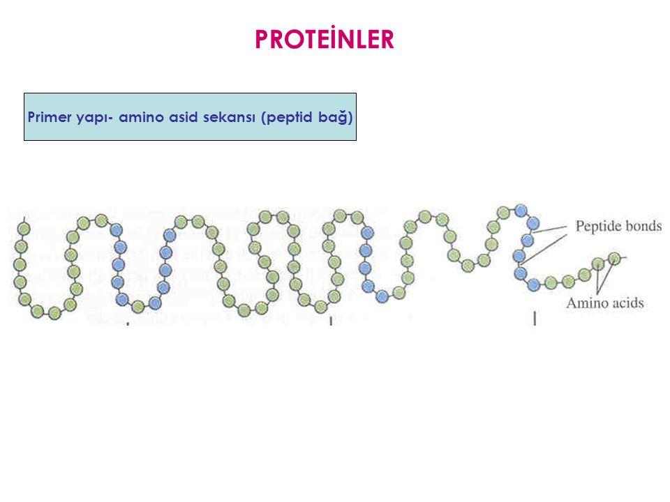 Primer yapı- amino asid sekansı (peptid bağ)