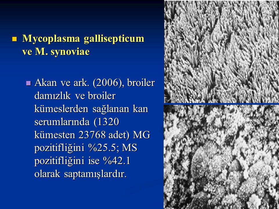 Mycoplasma gallisepticum ve M. synoviae