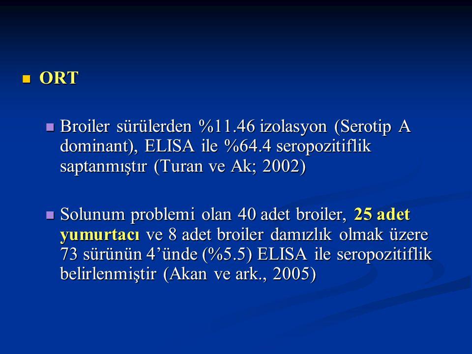 ORT Broiler sürülerden %11.46 izolasyon (Serotip A dominant), ELISA ile %64.4 seropozitiflik saptanmıştır (Turan ve Ak; 2002)