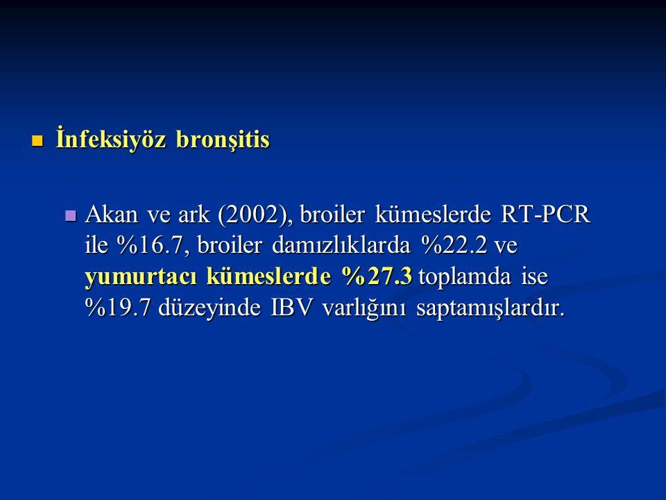 İnfeksiyöz bronşitis