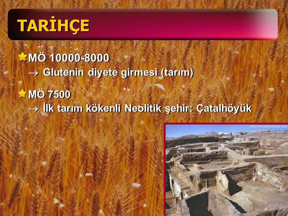 TARİHÇE MÖ 10000-8000 ® Glutenin diyete girmesi (tarım)